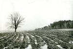 Bangor, Maine, City Farm