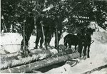 Logging Crew in the Maine Woods, 1926