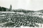 Log Harvest
