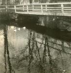 Belfast, Maine, Bridge with Ducks
