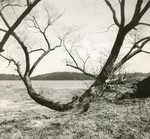 Bath, Maine, Kennebec Willows by Franklin Eaton