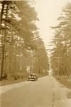 Brunswick, Maine, Brunswick Pines