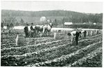 Aroostook County Potato Farm