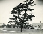 Campus Views, undated