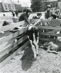 Maine Day 1974